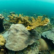 Varadero Coral Reef Thrives in the Bay of Cartagena