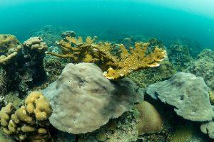 varadero coral reef garden
